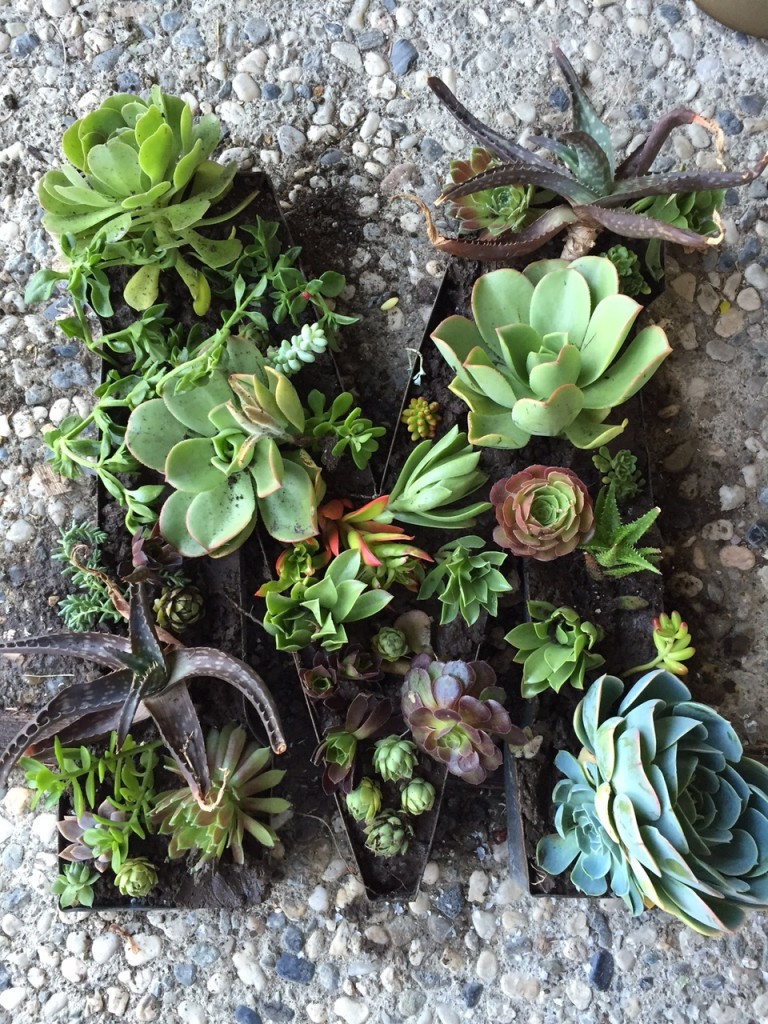 JLM Designs Metal Succulent Monogram DIY